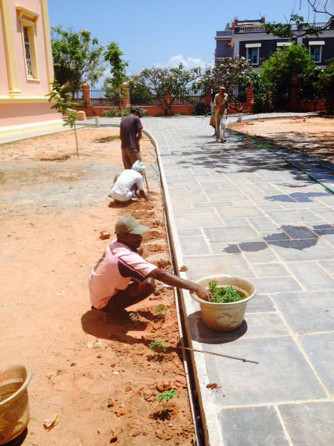 New plants have been chosen from the Auroville Botanical Garden